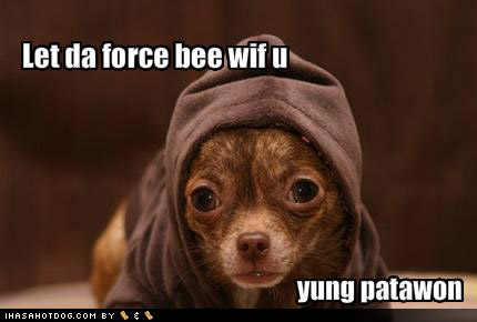 funny-dog-pictures-let-the-force-be-with-you.jpg